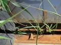 1992 John Deere 643 Corn Head