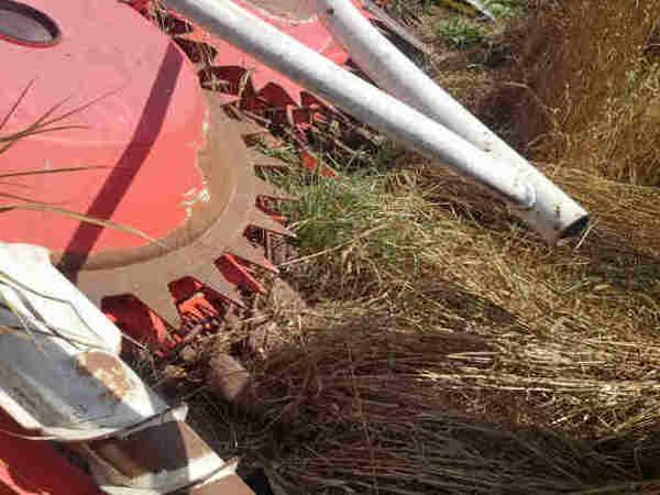 2004 Kemper 4500 Corn Head