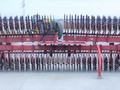 1995 Case IH 181MT Rotary Hoe