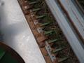 1997 John Deere 930R Platform