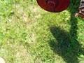 John Deere 7000 Planter