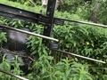 Case TIGER MATE 14FT Field Cultivator